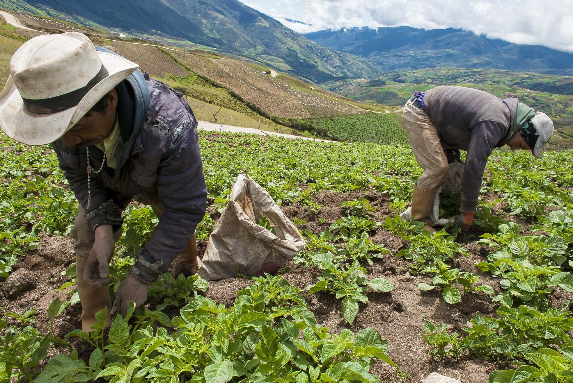 El referendo por el agro nacional: La nueva apuesta de Dignidad Agropecuaria