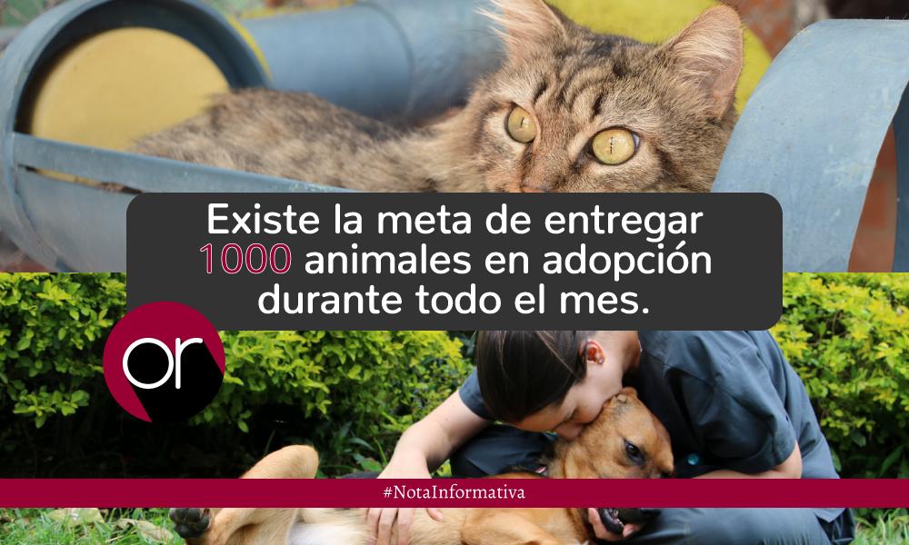 La Perla promueve la adopción animal desde su propia App
