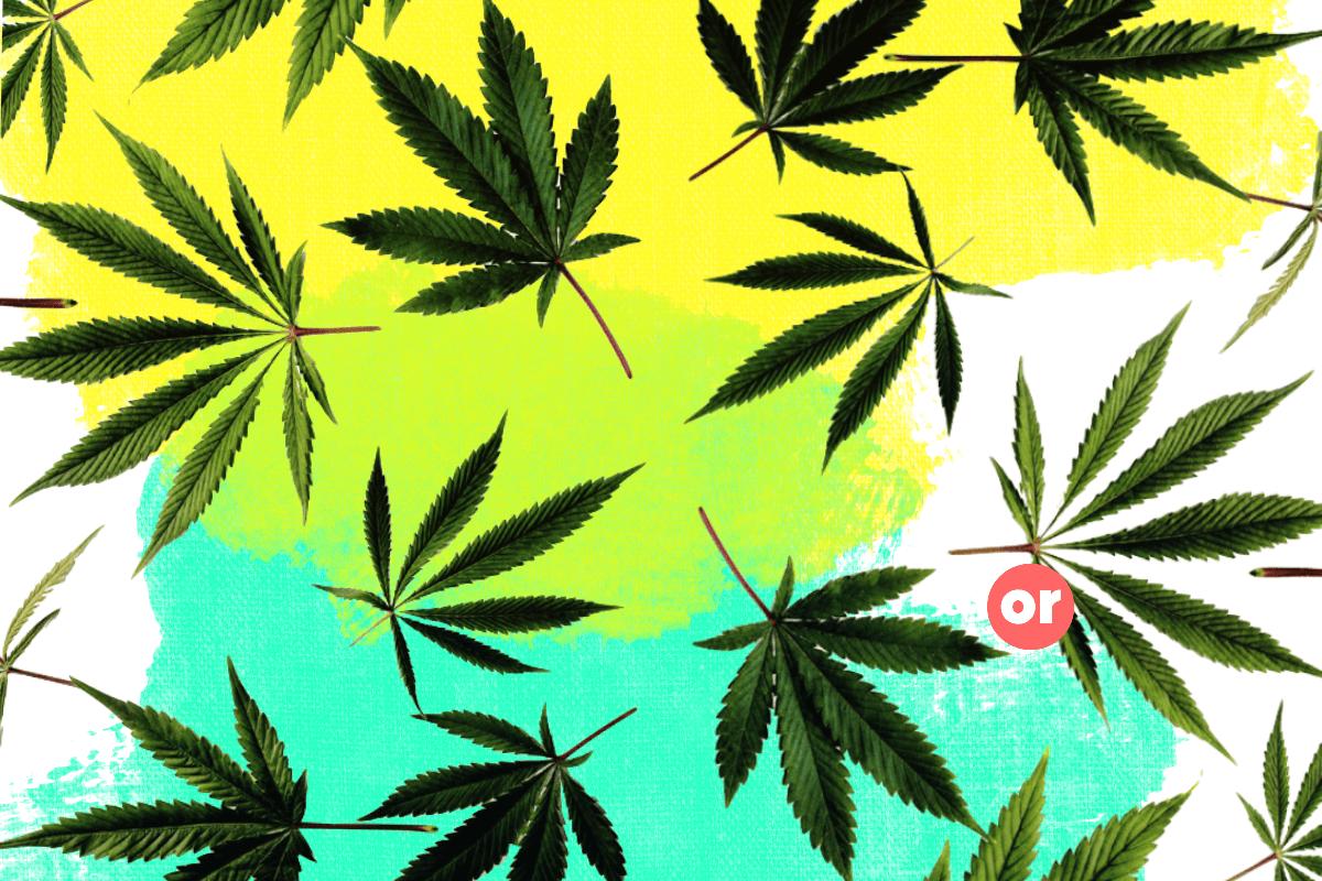 Mientras México avanza en la legalización de la marihuana, Colombia sigue estancada